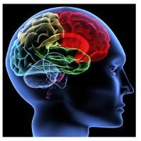 Научить машину распознавать голос как это делает человеческий мозг